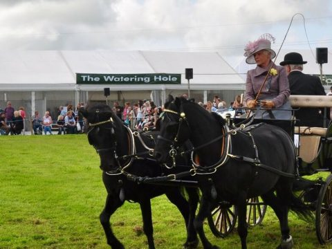 HW Sponsor Holsworthy Agricultural Show for  5th year running! image 12
