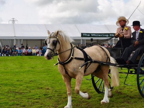 HW Sponsor Holsworthy Agricultural Show for  5th year running! image 13